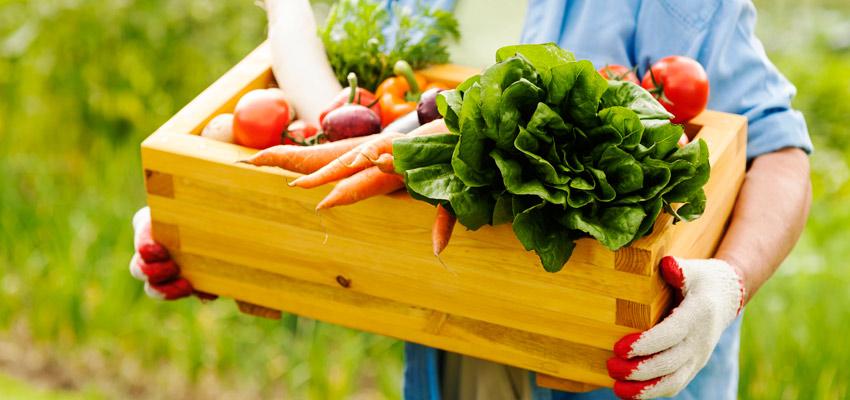 os melhores alimentos naturais - Orgânicos